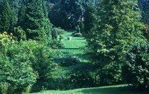 Image of Medicinal Garden  1961 - 2013.1.602