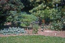 Image of Medicinal Garden  1963 - 2013.1.603