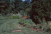 Image of Medicinal Garden 1964 - 2013.1.610