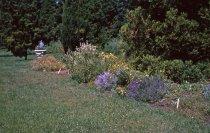 Image of Medicinal Garden 1964 - 2013.1.611