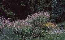 Image of Medicinal Garden  1964 - 2013.1.615