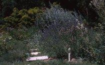 Image of Medicinal Garden  1964 - 2013.1.616