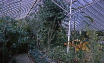 Image of Medicinal Garden in the Lower Greenhouse  1965 - 2013.1.623