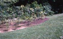 Image of Medicinal Garden  1966 - 2013.1.624