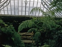 Image of The Fernery  1957 - 2013.1.633