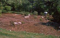 Image of Heath garden, Morris Arboretum 1963 - 2013.1.659
