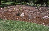 Image of Heath garden, Morris Arboretum 1963 - 2013.1.660
