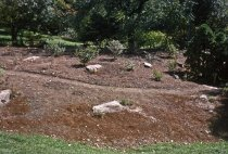 Image of Heath garden, Morris Arboretum 1963 - 2013.1.661