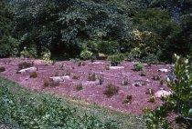 Image of Heath garden, Morris Arboretum 1964 - 2013.1.662
