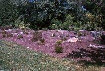 Image of Heath garden, Morris Arboretum 1964 - 2013.1.663