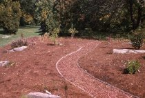 Image of Heath garden, Morris Arboretum 1963 - 2013.1.665