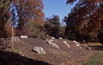 Image of Heath garden, Morris Arboretum 1964 - 2013.1.668