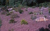 Image of Heath garden, Morris Arboretum 1964 - 2013.1.669