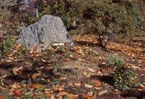 Image of Heath garden, Morris Arboretum 1964 - 2013.1.670