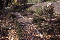 Image of Heath garden, Morris Arboretum 1964 - 2013.1.671
