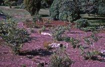 Image of Heath garden, Morris Arboretum 1964 - 2013.1.673