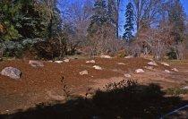 Image of Heath garden, Morris Arboretum 1964 - 2013.1.677
