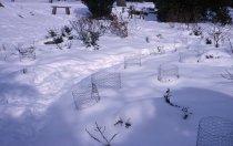 Image of Heath garden, Morris Arboretum  1965 - 2013.1.679