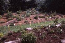 Image of Heath garden mapping, Morris Arboretum 1965 - 2013.1.685