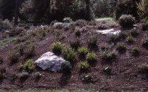 Image of Heath garden, Morris Arboretum 1965 - 2013.1.686
