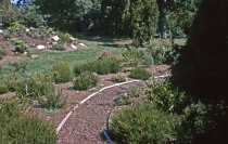 Image of Heath garden, Morris Arboretum 1965 - 2013.1.687