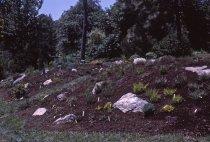 Image of Heath garden,  Morris Arboretum 1965 - 2013.1.690