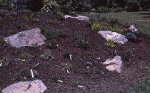 Image of Heath garden,  Morris Arboretum 1965 - 2013.1.691