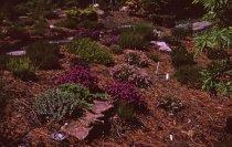 Image of Heath garden,  Morris Arboretum 1966 - 2013.1.692