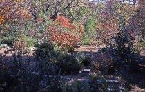 Image of Heath garden,  Morris Arboretum 1965 - 2013.1.695