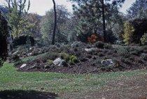 Image of Heath garden,  Morris Arboretum 1965 - 2013.1.697