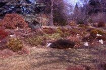Image of Heath garden,  Morris Arboretum 1968 - 2013.1.699