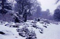 Image of Heath Garden in Winter  1967 - 2013.1.704