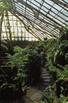 Image of Interior of Fernery - 2013.27.4