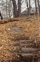 Image of Steps near Widener