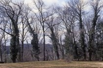 Image of Wissahickon Woods in Winter  1980s - 2013.27.80