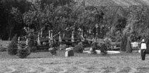 Image of Early Arboretum With Rustic Bridge  1900 - 2004.1.165