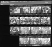 Image of Fernery Negative Sheets  1994 - 2014.42.1