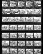 Image of Fernery Negative Sheet  1994 - 2014.42.3