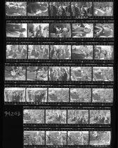 Image of Fernery Negative Sheet  1994 - 2014.42.5