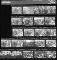 Image of Fernery Negative Sheet  1994 - 2014.42.6