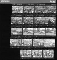 Image of Fernery Negative Sheet   1994 - 2014.42.7