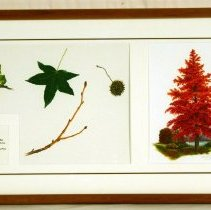 Image of Painting - Sweet Gum