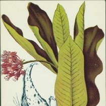 Image of How Indians use wild plants for food, medicine, and crafts - Densmore, Frances, 1867-1957.