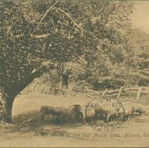 Image of Postcard - In the Shade of the Old Apple Tree, Muncie, Ind.