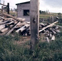 Image of Cat in the Woodpile - Transparency, Slide