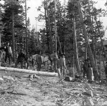 Image of 10 men logging with horse - Negative, Glass Plate