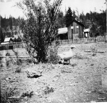 Image of 1975.61.80