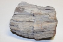Image of 79.1.2.25, Petrified Wood