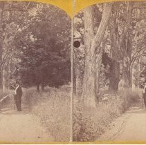 Image of 2010.015.0001 - Stereoview