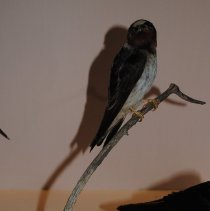Image of 2061 - Birds